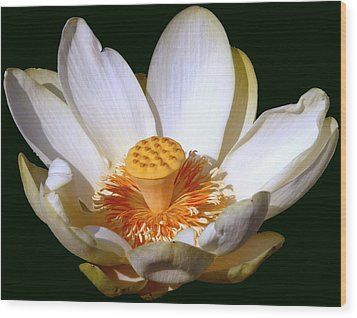 Wood Print featuring the photograph Lotus Blossom #2 by Jim Whalen
