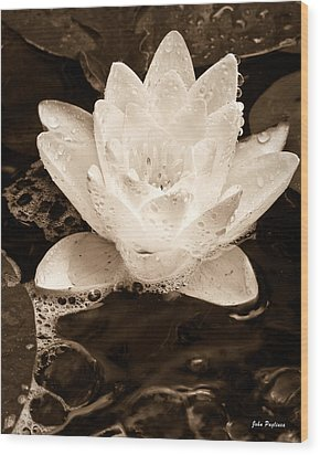 Lotus Blossom Wood Print