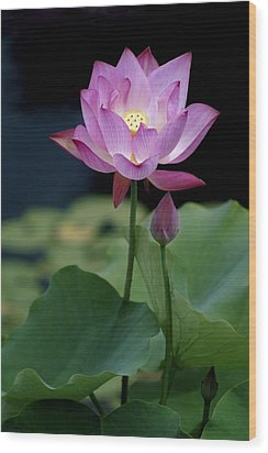 Wood Print featuring the photograph Lotus Blossom by Penny Lisowski