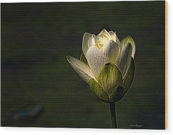 Wood Print featuring the photograph Lotus Blossom by Travis Burgess