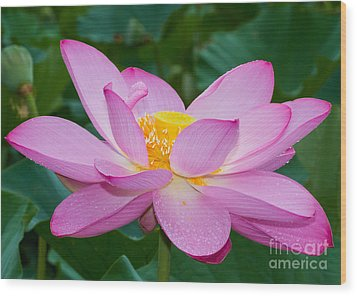Lotus Dew Wood Print