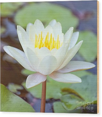 Lotus Flower 02 Wood Print
