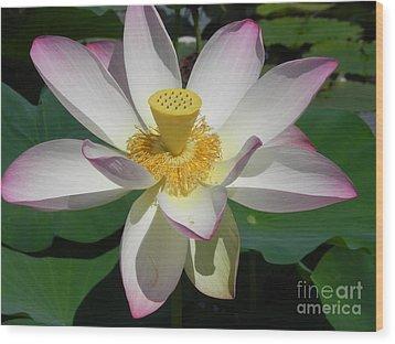 Lotus Flower Wood Print by Chrisann Ellis