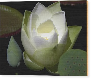 Lotus Flower In White Wood Print