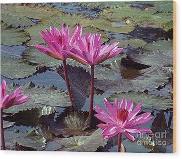 Wood Print featuring the photograph Lotus Flower by Sergey Lukashin