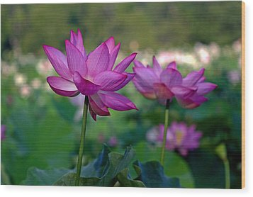 Wood Print featuring the photograph Lotus Flowers by Jerry Gammon