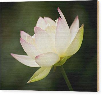 Lotus Glow Wood Print by Priya Ghose