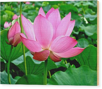 Lotus Heaven - 68 Wood Print by Larry Knipfing