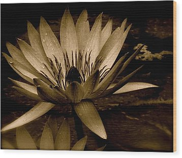 Lotus II Wood Print