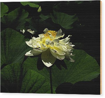 Wood Print featuring the digital art Lotus In Sunlight by John Freidenberg