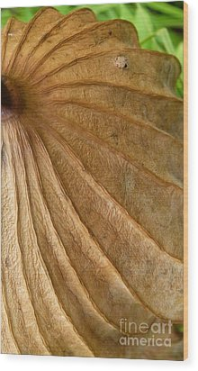 Wood Print featuring the photograph Lotus Leaf by Jane Ford