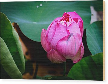 Lotus Singapore Flower Wood Print by Donald Chen