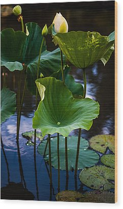 Lotuses In The Evening Light. Vertical Wood Print by Jenny Rainbow