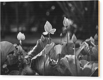 Lotuses In The Pond. Black And White Wood Print by Jenny Rainbow