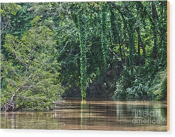 Louisiana Bayou Toro Creek Swamp Wood Print by D Wallace