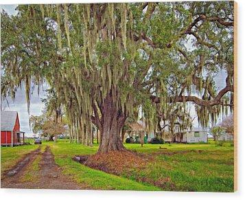 Louisiana Country Oil Wood Print by Steve Harrington