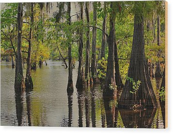 Louisiana Cypress Swamp Wood Print by Ester  Rogers
