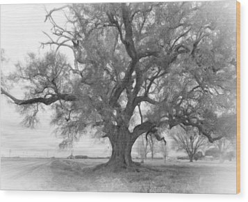 Louisiana Dreamin' Monochrome Wood Print by Steve Harrington