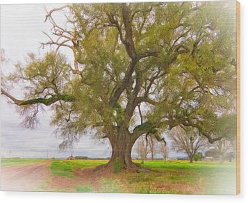 Louisiana Dreamin' Wood Print by Steve Harrington