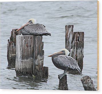 Louisiana Pelicans On Lake Ponchartrain Wood Print