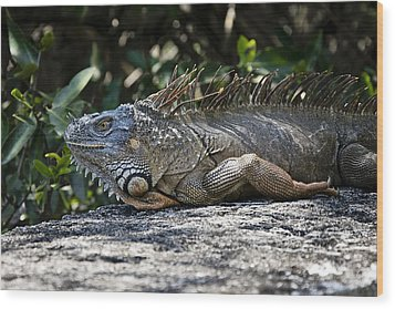 Lounging Lizard Wood Print