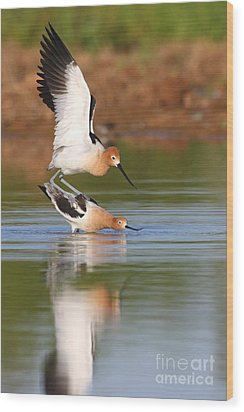 Wood Print featuring the photograph Love Avocet Style by Ruth Jolly