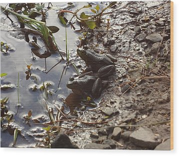 Wood Print featuring the photograph Love Frogs by Michael Porchik