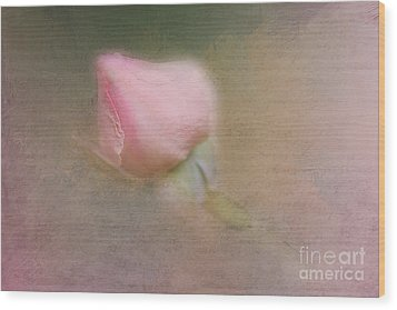 Love In Bloom  Wood Print by A New Focus Photography