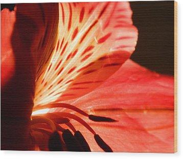Love Is In Bloom Wood Print by Tara Miller