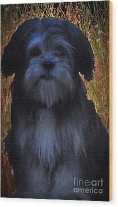 Love Puppies Wood Print by Katherine Williams