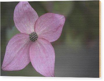 Pink Four Wood Print