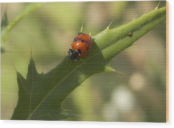 Lovely Lady Bug Wood Print by Shelly Gunderson