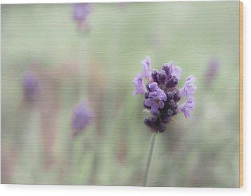 Lovely Lavender Wood Print by Jen Baptist