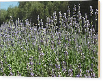 Lovely Lavender Wood Print