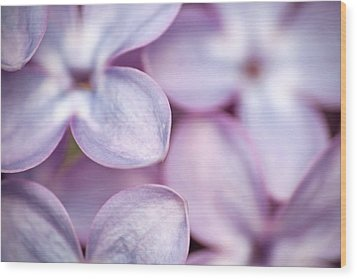 Lovely Lilacs Wood Print by Peggy Collins