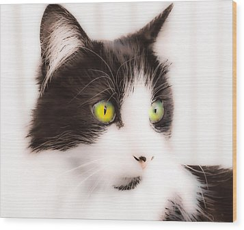 Lovely Little Kitten Wood Print