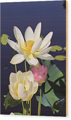 Lovely Lotus Wood Print by Katherine White
