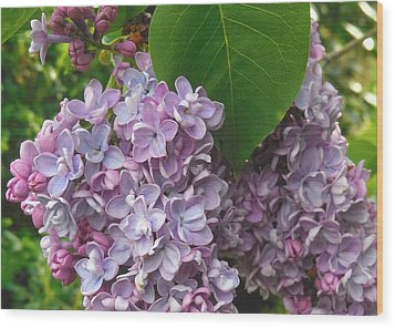 Lovely Luscious Lilacs Wood Print by Karen Molenaar Terrell