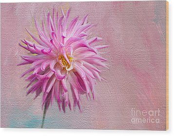Lovely Pink Dahlia Wood Print