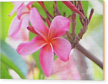 Wood Print featuring the photograph Lovely Plumeria by David Lawson