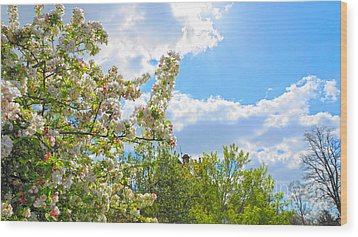 Lovely Spring Blossoms Wood Print