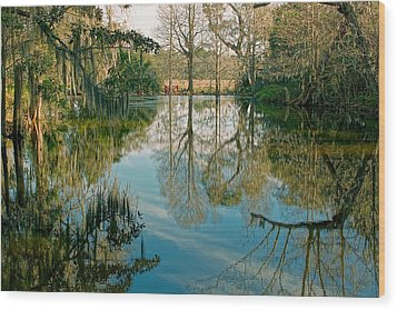 Low Country Swamp Wood Print