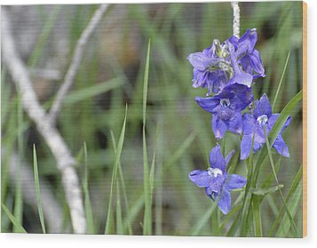 Low Larkspur In Yellowstone National Park Wood Print by Bruce Gourley