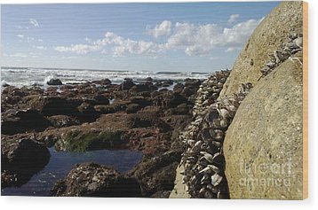 Low Tide Cabrillo National Monument Wood Print