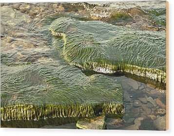 Low Water Algae Wood Print by Lena Wilhite