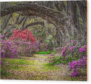 Lowcountry Spring Wood Print by Steve DuPree