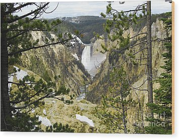 Lower Falls From Artist Point Yellowstone National Park Wood Print by Shawn O'Brien