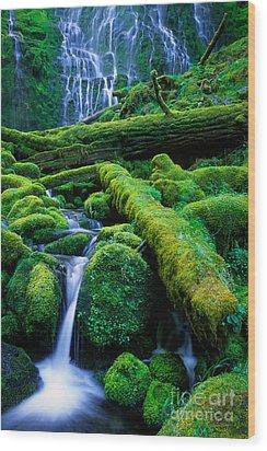 Lower Proxy Falls Wood Print by Inge Johnsson