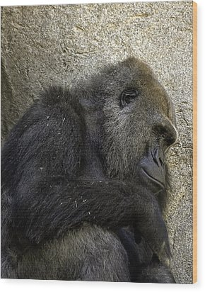 Lowland Gorilla Wood Print by Gary Neiss