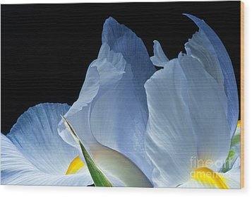 Wood Print featuring the photograph Lt Blue Iris 2013 by Art Barker